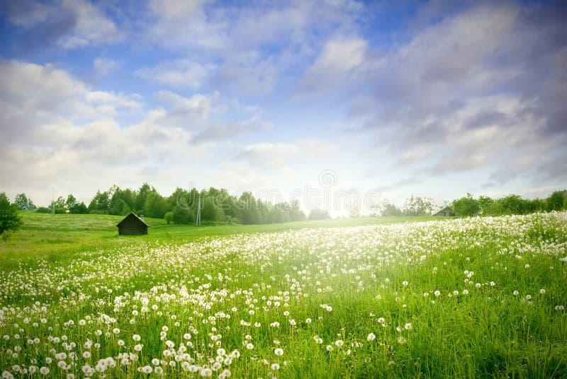 Paesaggio verde del campo fotografie stock libere da diritti