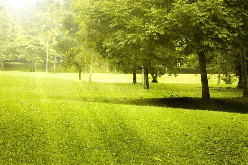 Paesaggio verde del campo immagini stock libere da diritti