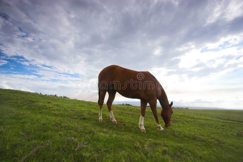 paesaggio verde del cavallo fotografia stock