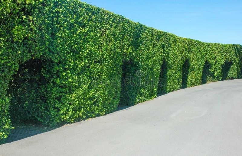 Paesaggio verde del giardino dell'albero all'aperto fotografie stock libere da diritti