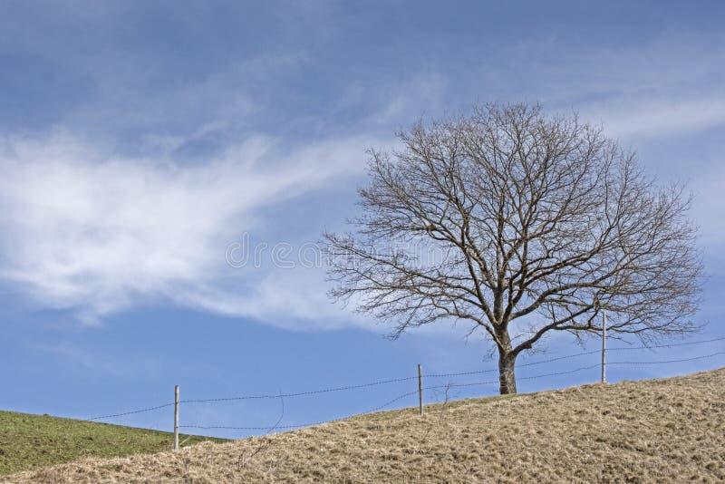 Paesaggio vicino a Murnau in Baviera superiore fotografie stock libere da diritti