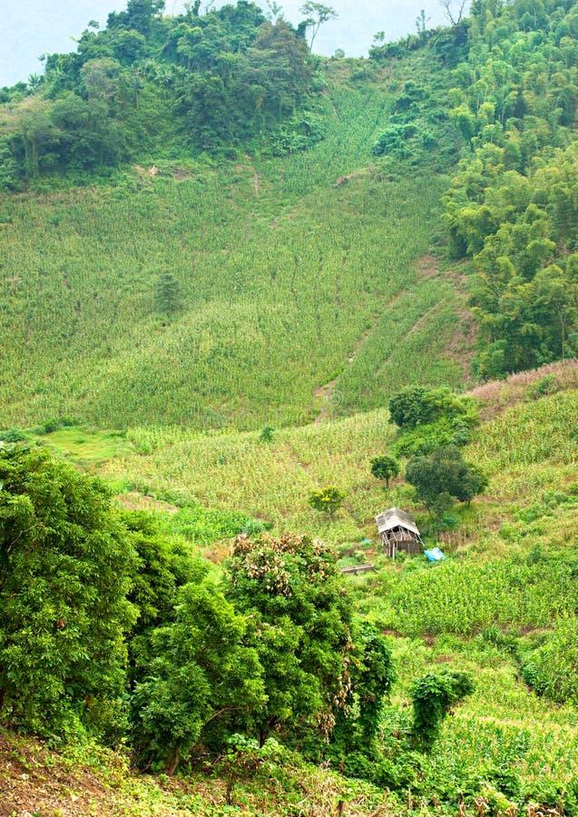 Paesaggio vietnamita del nord. fotografia stock libera da diritti