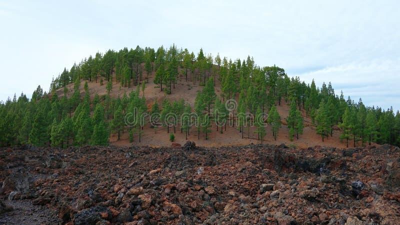 Paesaggio vulcanico della riserva naturale speciale di Chinyero, Tenerife, isole Canarie, Spagna fotografia stock libera da diritti