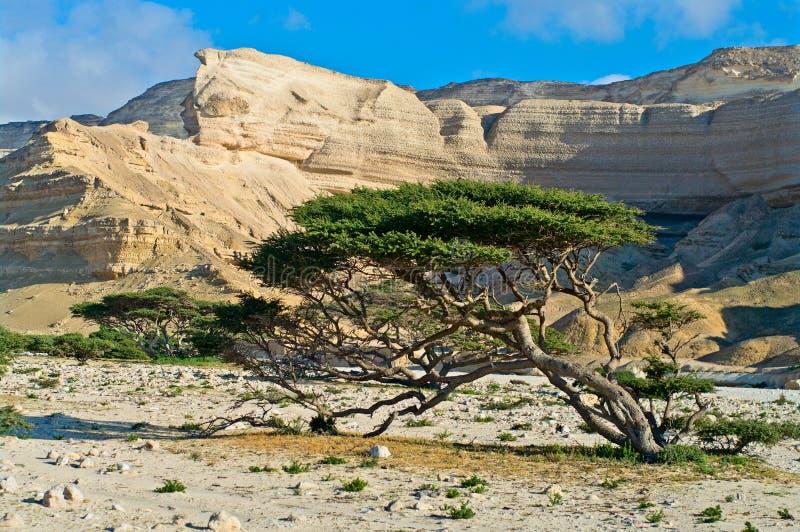 Paesaggio in Wadi Shuwaymiyah l'oman fotografie stock libere da diritti