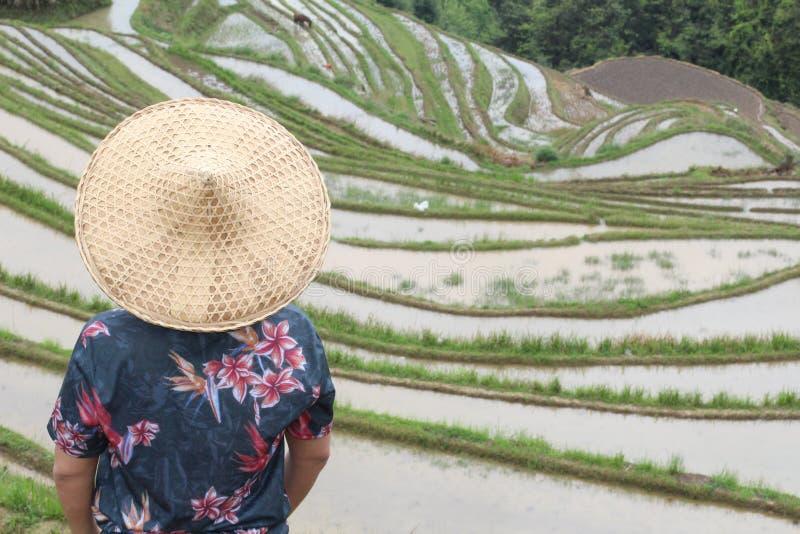 Paesano asiatico nei terrazzi asiatici del riso fotografie stock libere da diritti