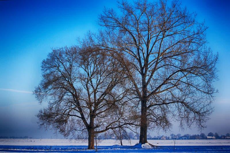 paese blu di inverno fotografia stock
