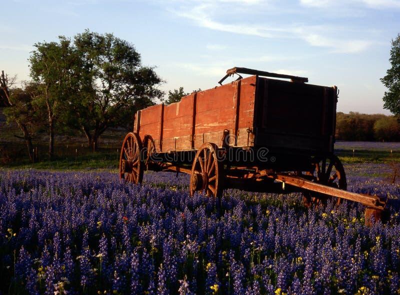 Paese della collina, il Texas fotografia stock libera da diritti