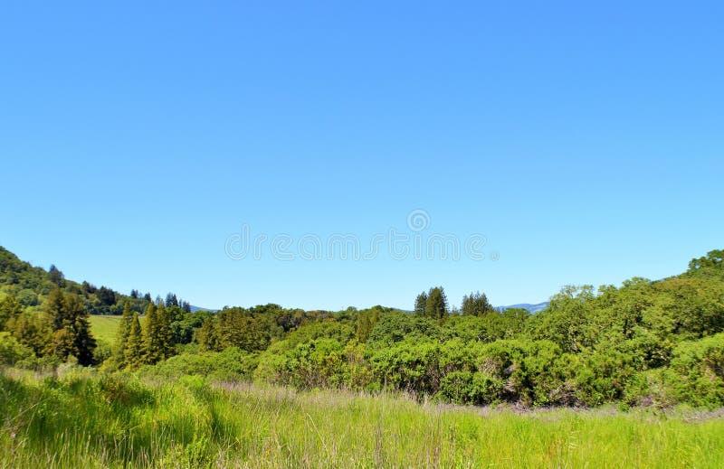 Paese di vino di California bello Sonoma immagini stock