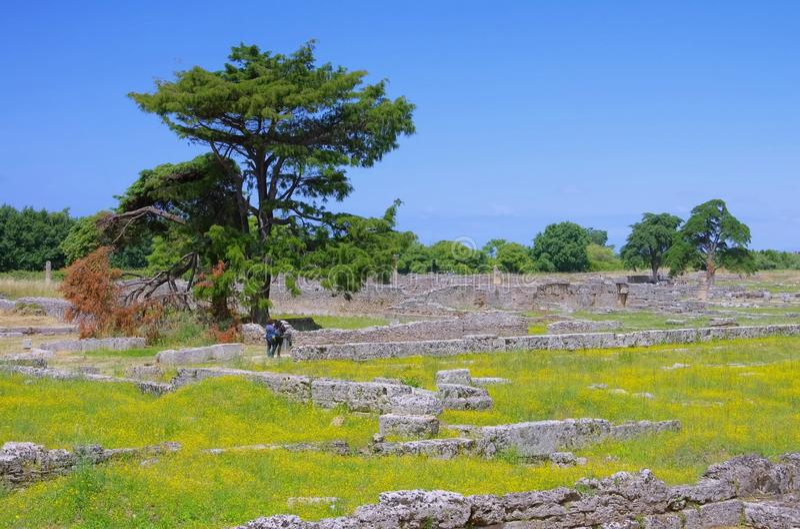 Download Paestum excavations stock photo. Image of landmark, ancient - 33344636
