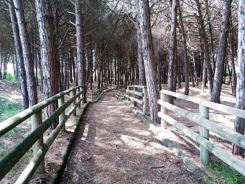 Paestum forest. A path in a pine forest at paestum in italy stock images