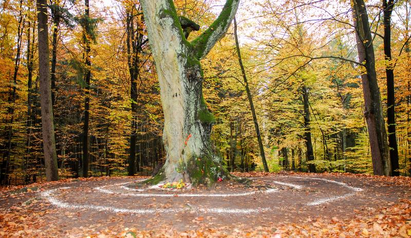 Pagan altar and spiral works outside next to a tree. royalty free stock images