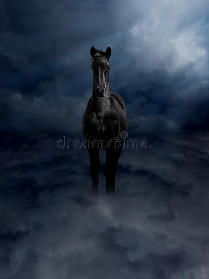 Pagasus Black Steed in Storm Clouds. Pegasus Black Steed Standing in Dark Storm Clouds royalty free stock photo