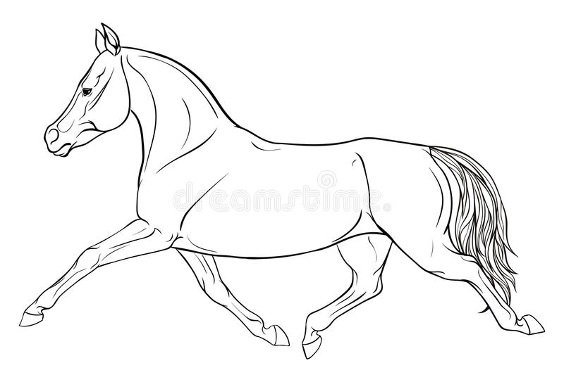 Dressage Horse Coloring Pages | Horse coloring pages, Horse ... | 543x800