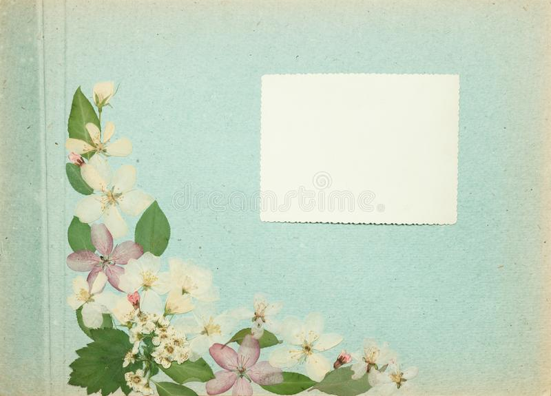 Page from an old photo album blue color. Scrapbooking element decorated with leaves, flowers and petals apple tree. Rustic, royalty free stock photo