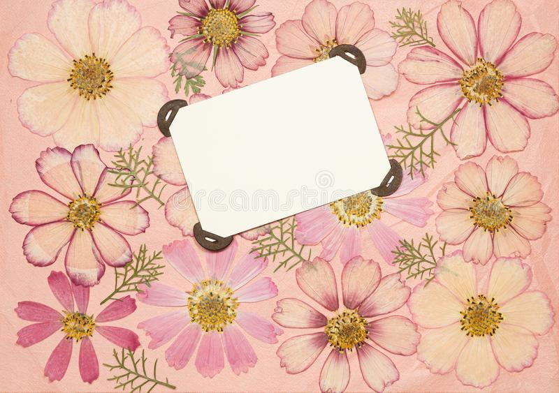 Page from an old photo album pink color. Scrapbooking element decorated with leaves, flowers and petals cosmos, kosmeya. Rustic stock image