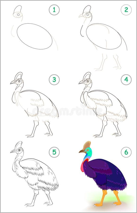 Page shows how to learn step by step to draw a cute cassowary. Developing children skills for drawing and coloring. Vector image. Vector cartoon image. Scale to vector illustration