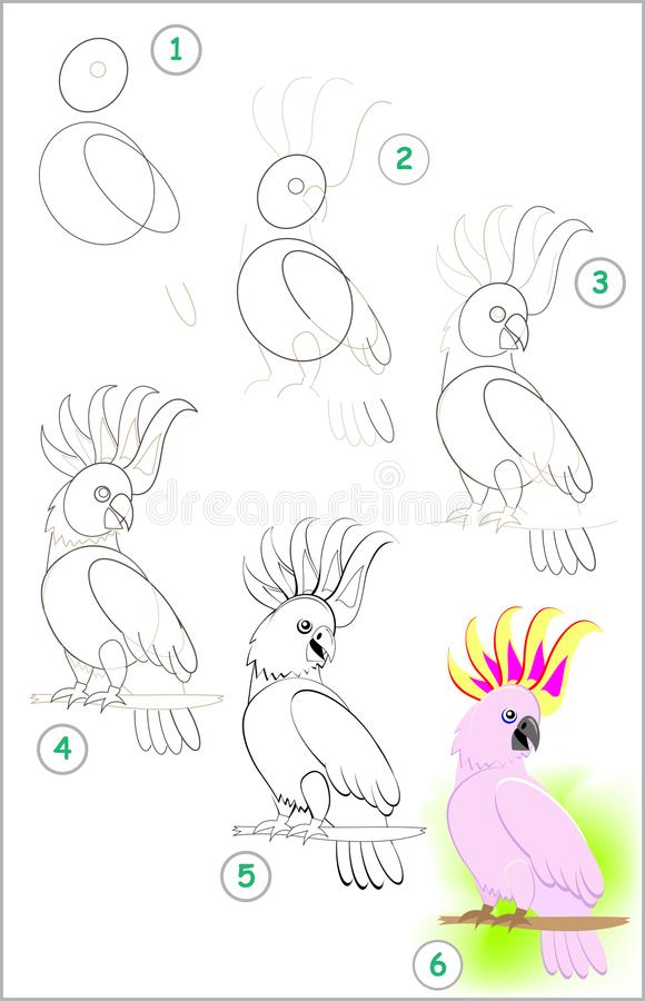 Page shows how to learn step by step to draw a cute little cockatoo parrot. Developing children skills for drawing and coloring. Vector cartoon image. Scale to stock illustration