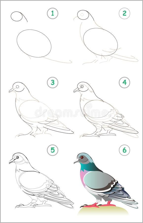Page shows how to learn step by step to draw a cute pigeon. Developing children skills for drawing and coloring. Vector image. Developing children skills for royalty free illustration