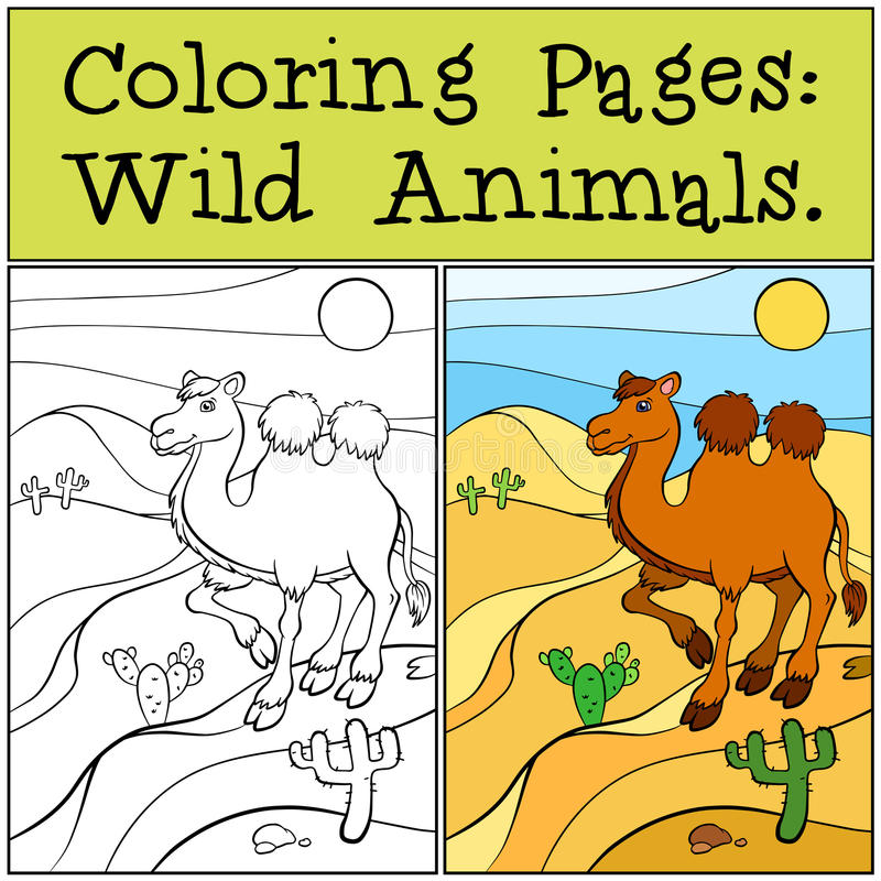 Pages de coloration : Animaux sauvages Chameau mignon illustration de vecteur