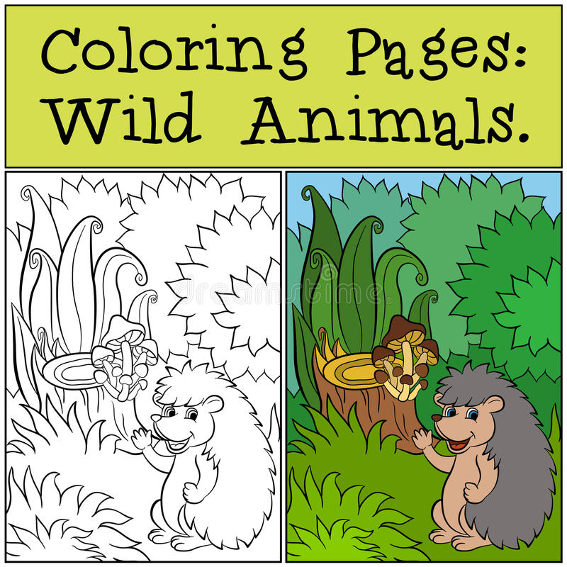 Pages de coloration : Animaux sauvages Petit hérisson mignon illustration libre de droits