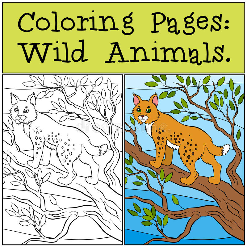 Pages de coloration : Animaux sauvages Petit lynx mignon illustration stock