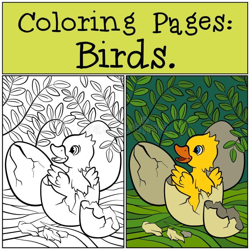 Pages de coloration : Oiseaux Petit caneton mignon dans l'oeuf illustration libre de droits