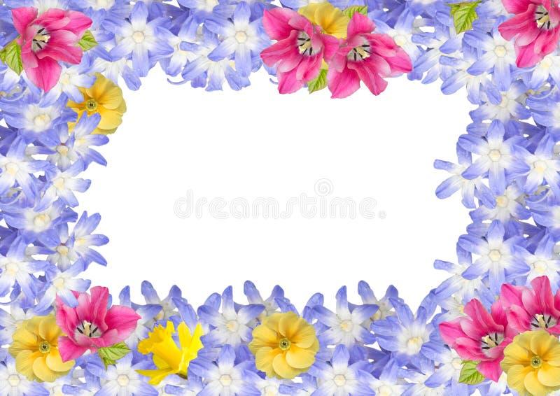 Pagina, cartolina dei fiori della molla isolati royalty illustrazione gratis