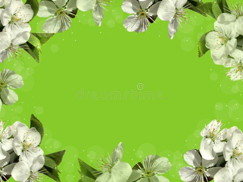 Pagina con i fiori bianchi immagini stock