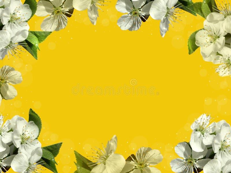 Pagina con i fiori bianchi fotografia stock