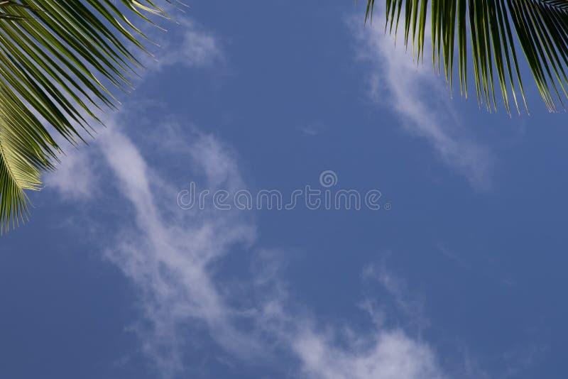 Pagina con i leafes della palma e di un cielo blu fotografia stock libera da diritti