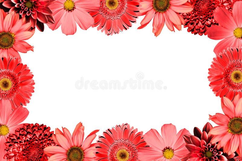 Pagina con la gerbera della miscela del collage dei fiori di rosso, il crisantemo, la dalia, la primula, girasole decorativo isol fotografia stock libera da diritti