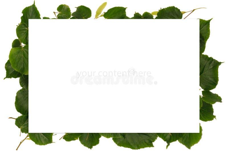 Pagina con la molla con le foglie del tiglio fotografie stock