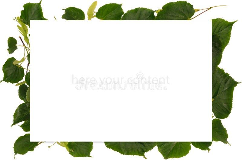 Pagina con la molla con le foglie del tiglio fotografie stock libere da diritti