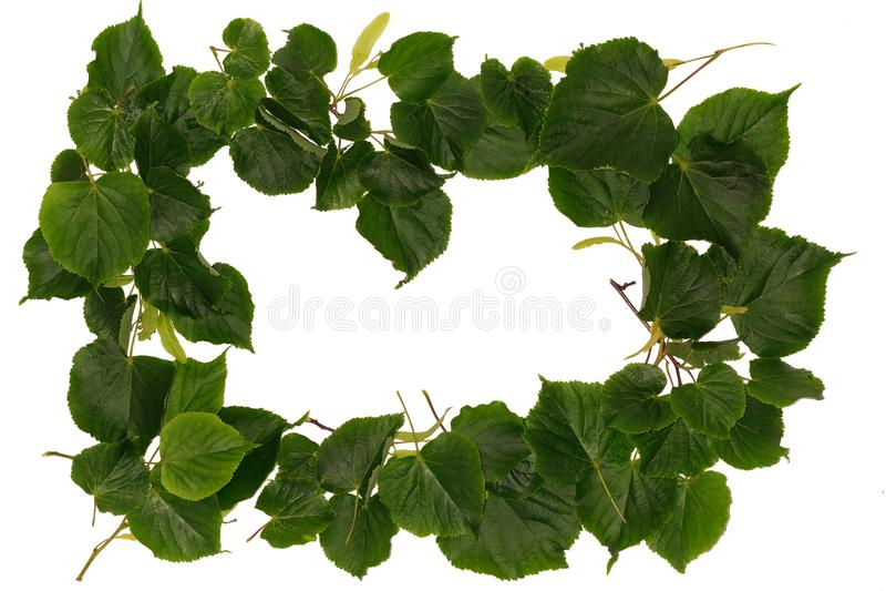 Pagina con la molla con le foglie del tiglio fotografia stock libera da diritti