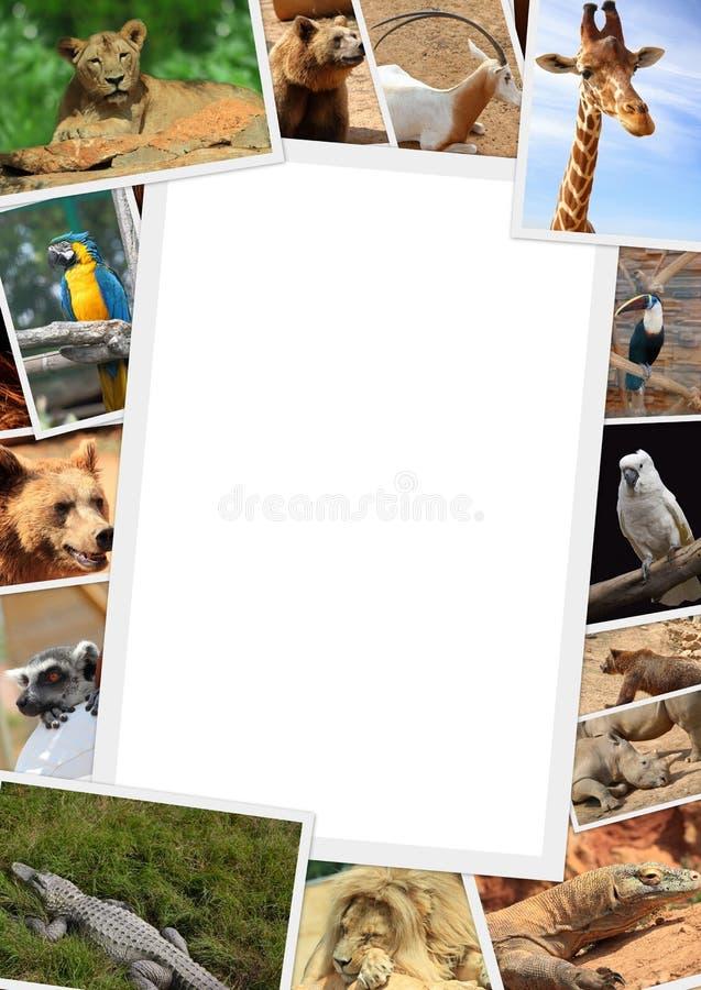 Pagina con la raccolta degli animali selvatici immagine stock libera da diritti