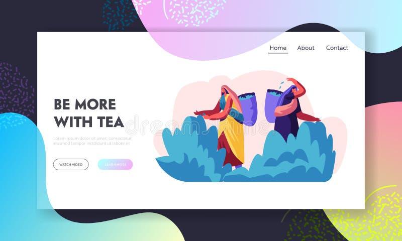 Pagina d'atterraggio del sito Web delle raccoglitrici del tè, ragazze in vestito indiano tradizionale che raccolgono le foglie di illustrazione vettoriale