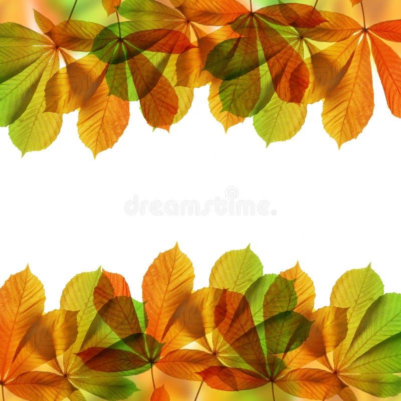 Download Pagina Dai Fogli Di Autunno Immagine Stock - Immagine di nave, autunno: 55359293