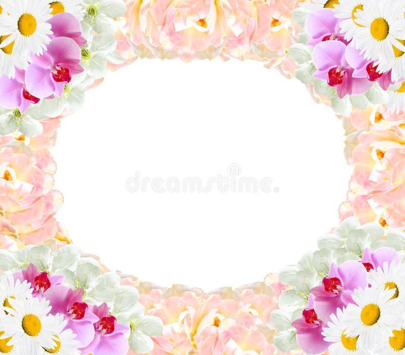 Pagina dalla camomilla differente dei tulipani delle orchidee dei fiori royalty illustrazione gratis