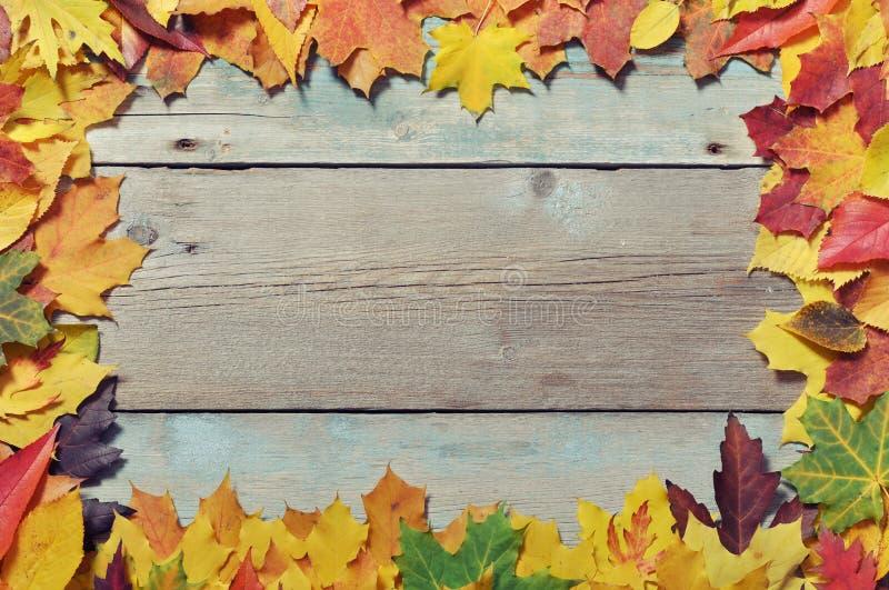 Pagina dalle foglie di autunno fotografia stock