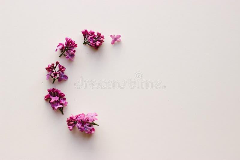 Pagina dei fiori lilla su fondo bianco fotografia stock