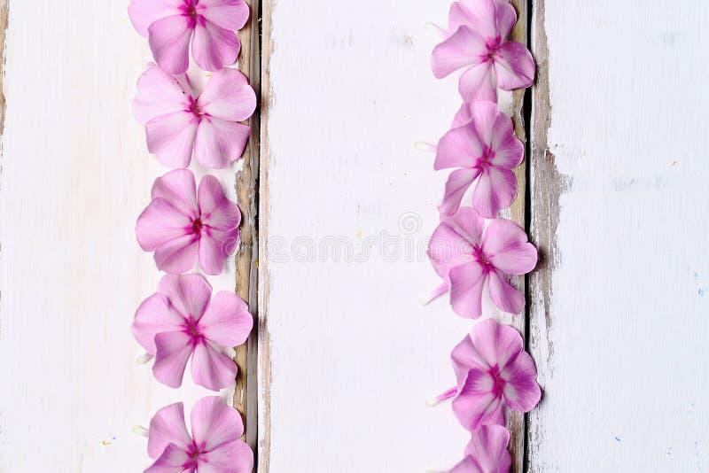 Pagina dei fiori sulla tavola fotografia stock libera da diritti