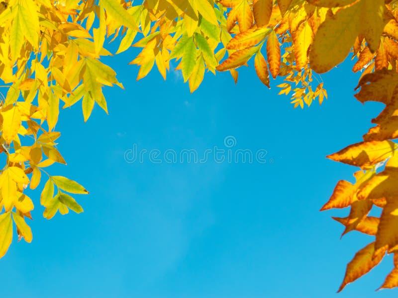 Pagina dei fogli di autunno gialli immagini stock libere da diritti