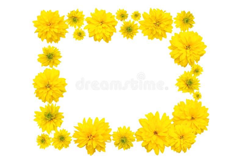 Pagina dei germogli di fiore gialli di Heliopsis fotografie stock