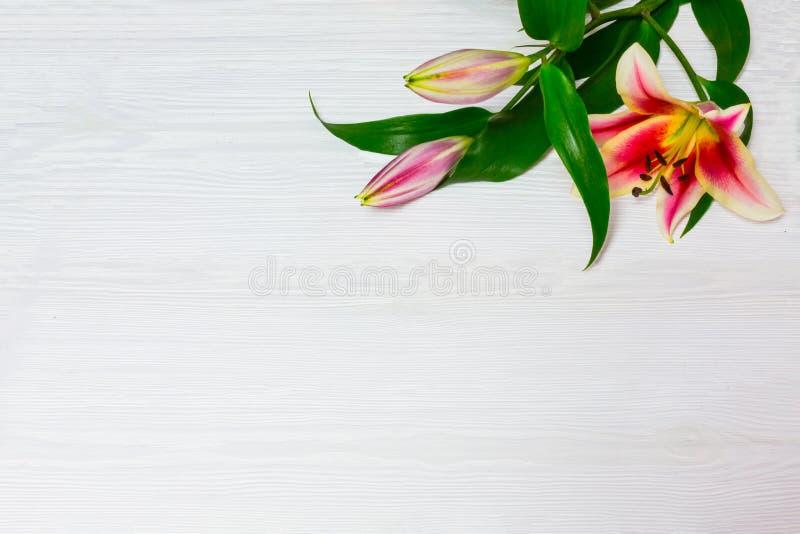 Pagina dei gigli bianchi su una vista superiore del fondo di legno bianco Fiorisce il bello fondo floreale dei fiori bianchi del  fotografie stock libere da diritti