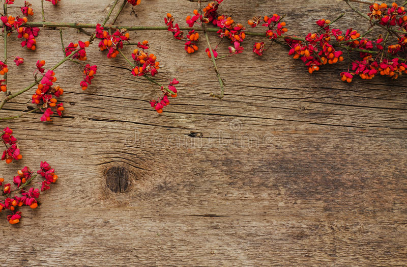 Pagina dei rami con i fiori rossi su un fondo di legno fotografie stock libere da diritti