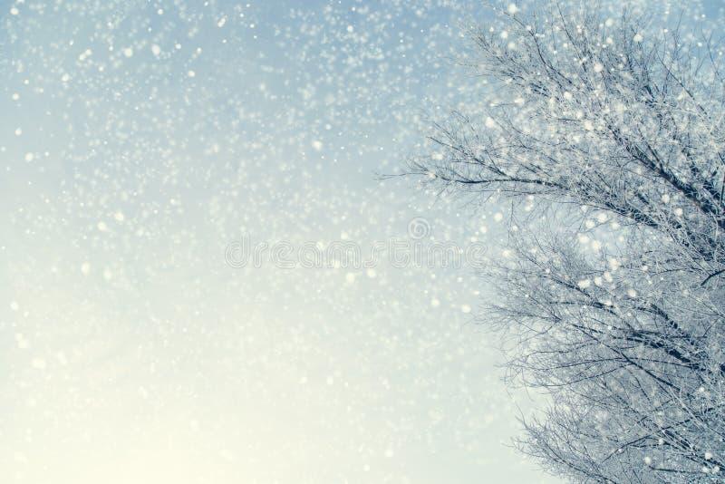 Pagina dei rami di albero nevosi contro cielo blu durante lo snowfal fotografie stock