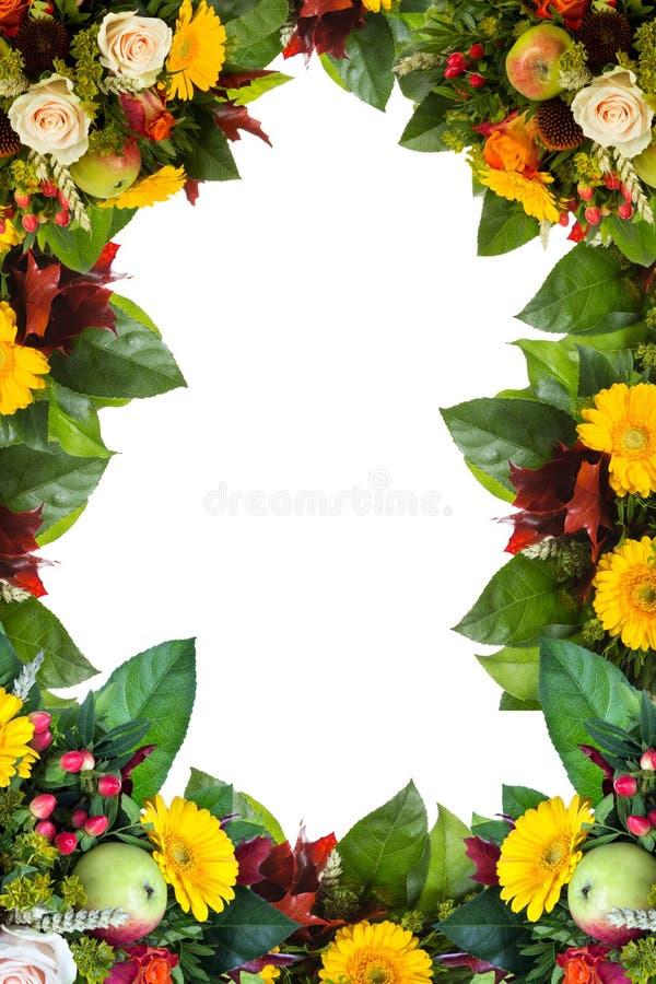 Pagina del fiore isolata su bianco fotografia stock libera da diritti