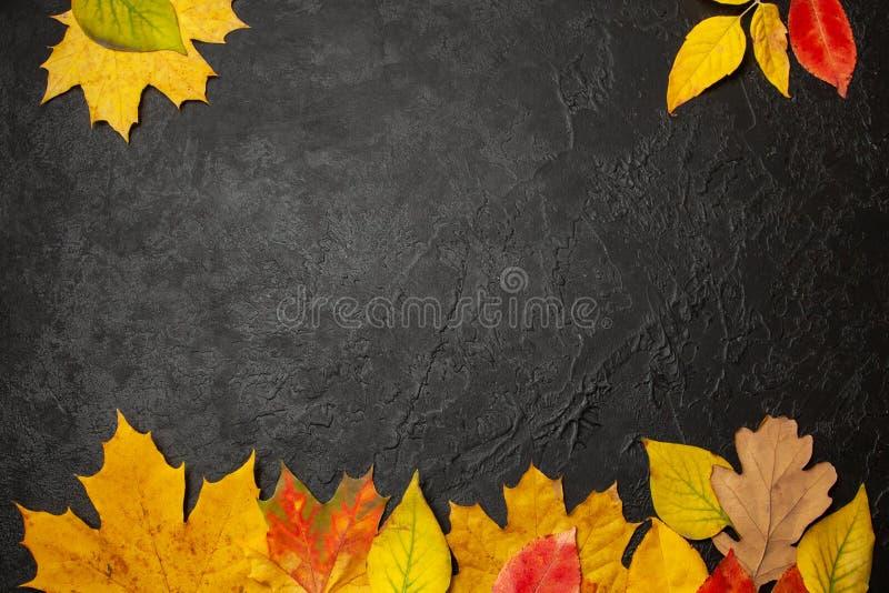 Pagina delle foglie gialle di autunno su fondo nero Menu o balank di concetto Modello fotografie stock