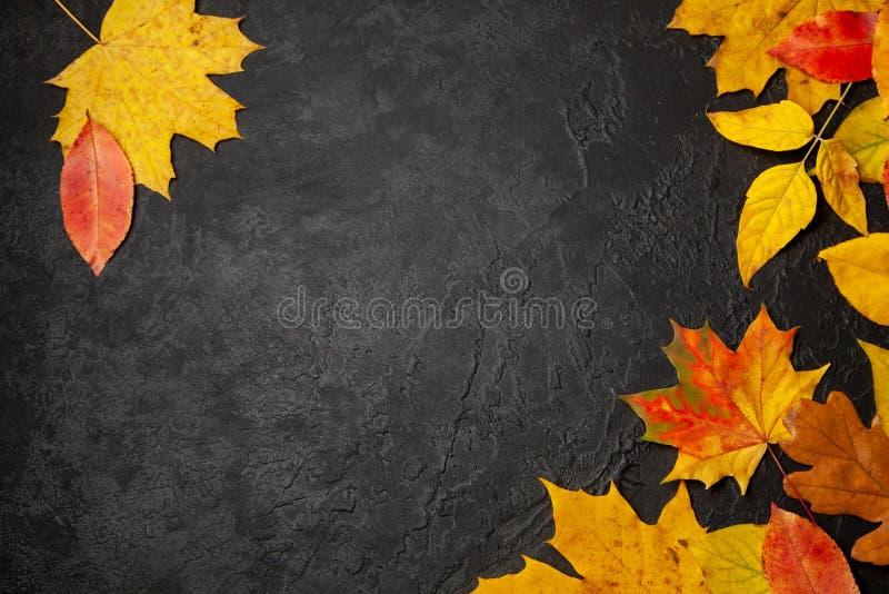 Pagina delle foglie gialle di autunno su fondo nero Menu o balank di concetto Modello immagini stock libere da diritti
