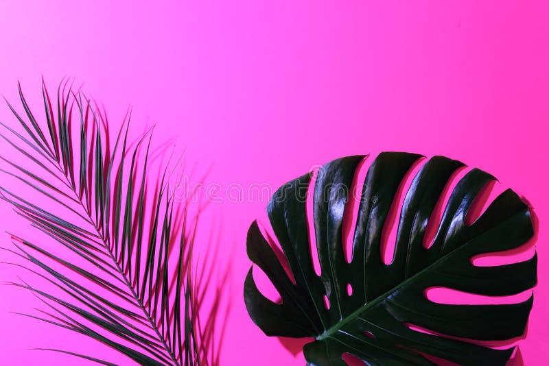 Pagina delle foglie tropicali su fondo rosa luminoso fotografia stock libera da diritti